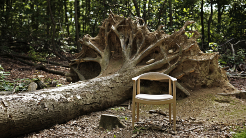 503_oak_tree(500)